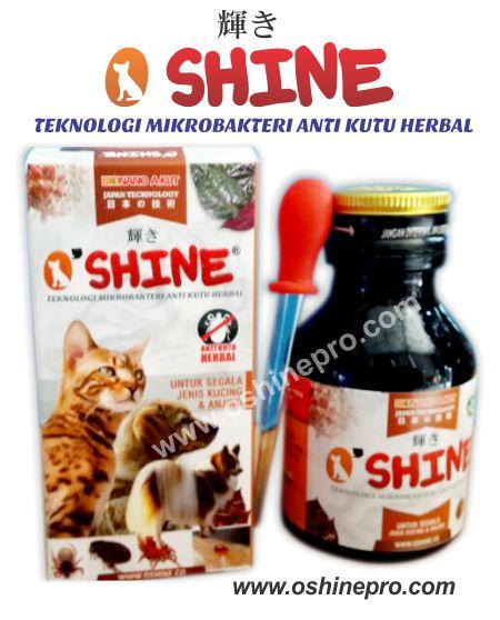 oshine untuk cara menghilangkan kutu kucing medium