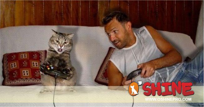 kucing hewan yang menyenangkan