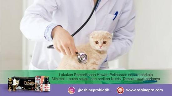 Kesalahan merawat kucing dan anjing yang kedelapan, tidak memeriksa kesehatan kucing dan anjing.