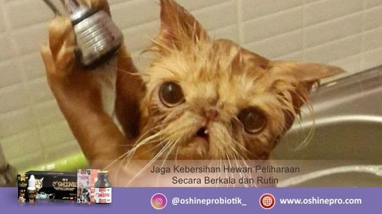Kesalahan merawat kucing dan anjing yang keempat belas, tidak menjaga kebersihan tubuh hewan.