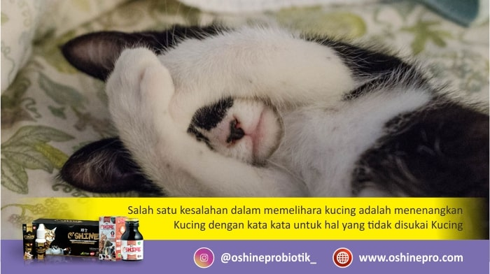 Kesalahan merawat kucing dan anjing yang kelima, menenangkan hewan dengan kata-kata.