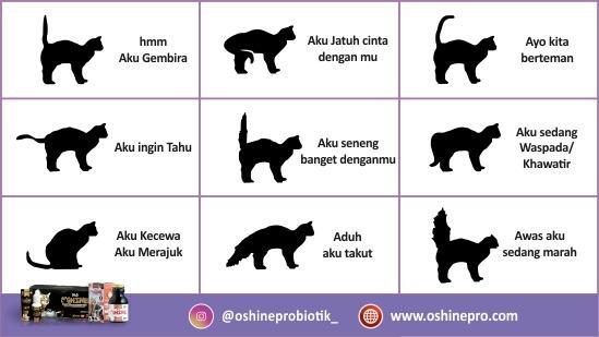 Kesalahan merawat kucing dan anjing yang ketiga belas, salah membaca bahasa tubuh hewan