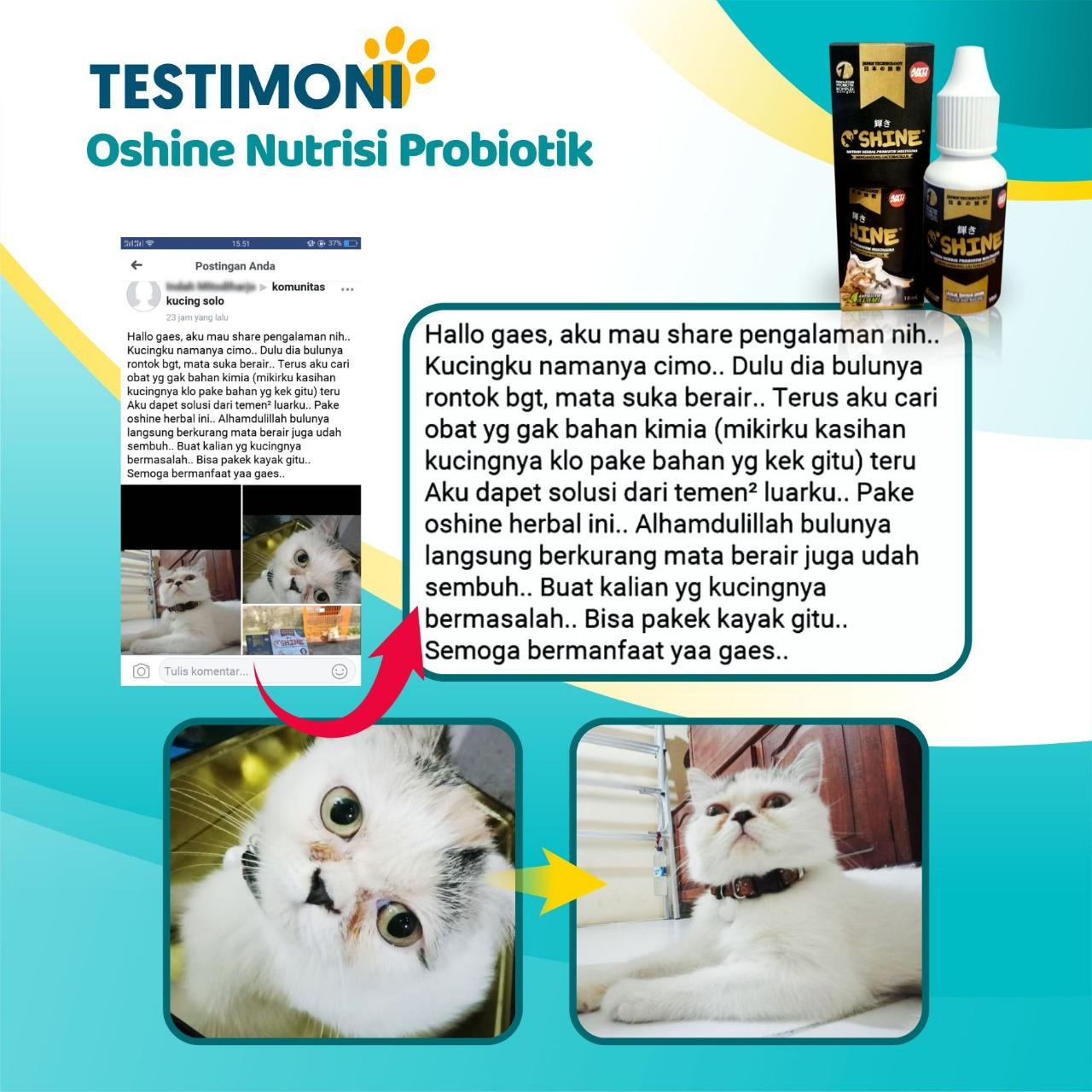 Solusi Herbal Alami untuk Kucing dan Anjing