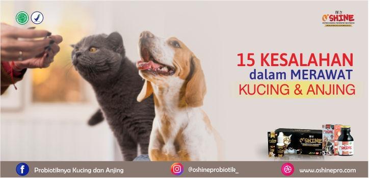 Hewan yang umum untuk dijadikan hewan peliharaan adalah kucing dan anjing. Untuk menjaga kesehatan tambahkan Oshine Nutrisi sebanyak 2-3 tetes ke wadah air setiap hari