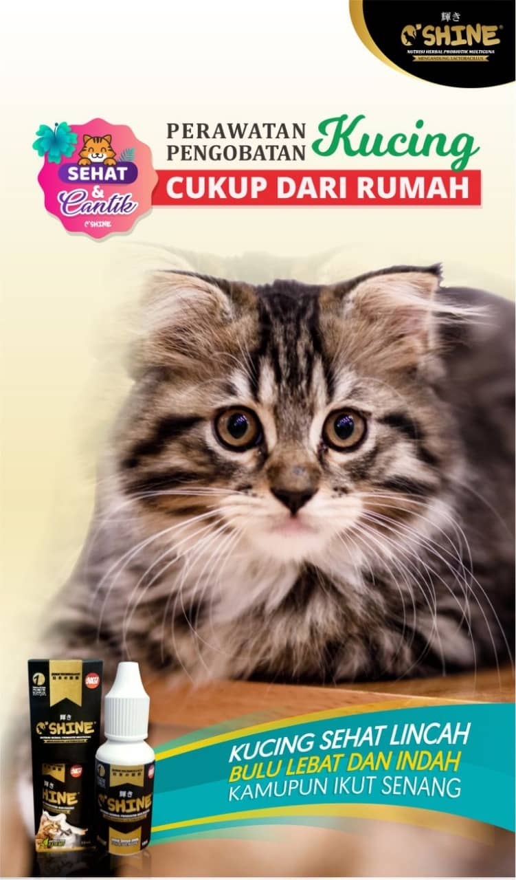 oshine probiotik kucing header