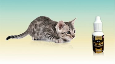 probiotik di pencernaan kucing