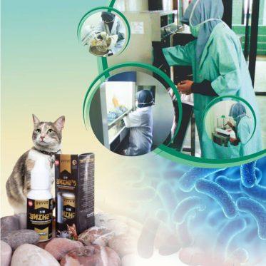 sistem pencernaan pada kucing