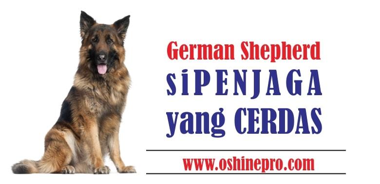 german shepherd anjing gembala