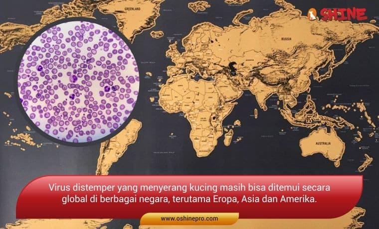 penyakit distemper tersebar di dunia