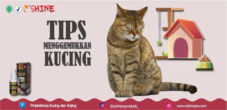 Makanan untuk menggemukkan kucing haruslah tinggi protein, serat dan berbau memikat. Tambah Oshine Nutrisi 2-3 tetes kedalam wadah air setiap hari