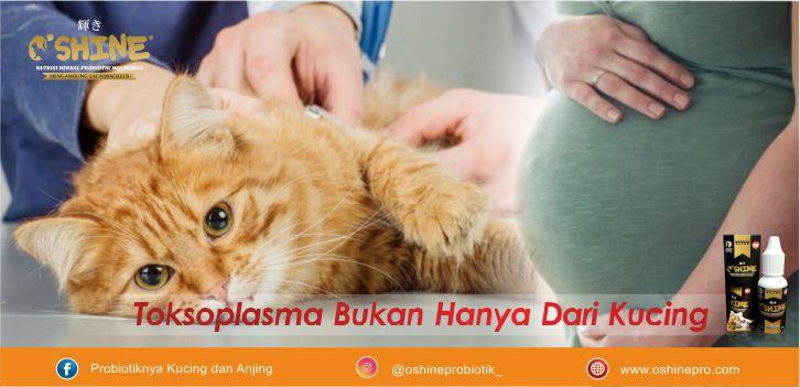 Toksoplasma bukan hanya dari kucing