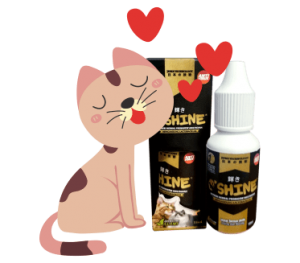 kucing cinta oshine kecil